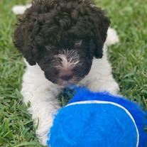 Meet Smudge! - Pets of Turramurra