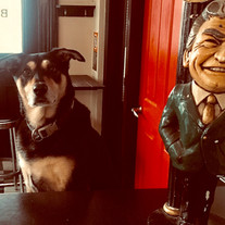 Jac - Pets of Newtown