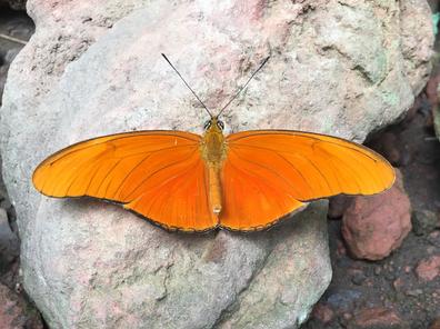 Mariposa 8.png