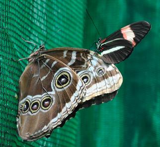 Mariposa 4.png
