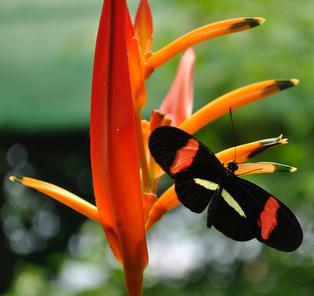 Mariposa 1.png