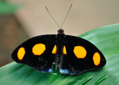Mariposa 12.png