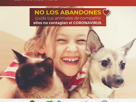 Cuida a los animales de compañía, ellos NO son fuente de contagio del Covid-19