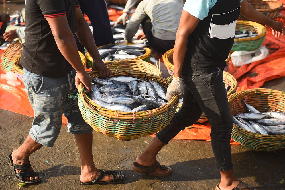 Men carrying tuna