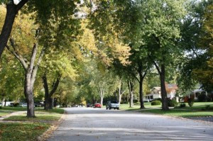 Funding opportunity: Urban & community forestry tree inventory grants