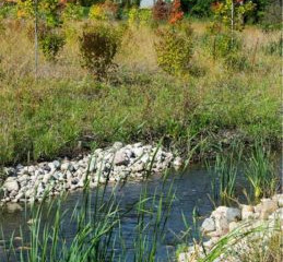 MWRD accepting applications for Stormwater Partnership Program