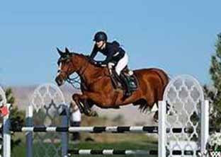 Horse shows in the Sun