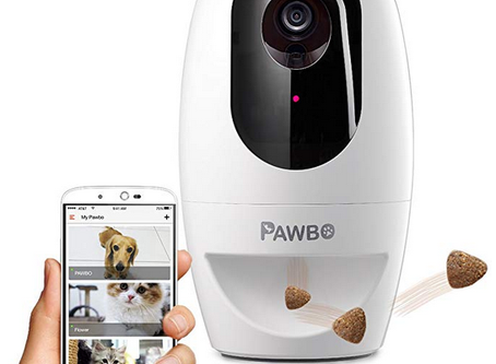 Watch out for Fido From A remote place With These Pet Cameras
