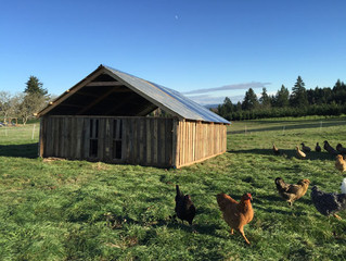 Building a Recycled Farm Structure