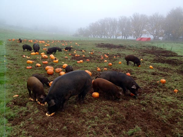 Heritage Hogs Celebrating Halloween