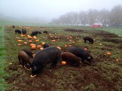 Heritage Hogs Celebrating Halloween