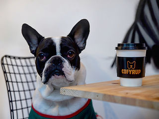 French bulldog coffee table