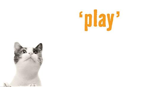 Cat Sitting & Play