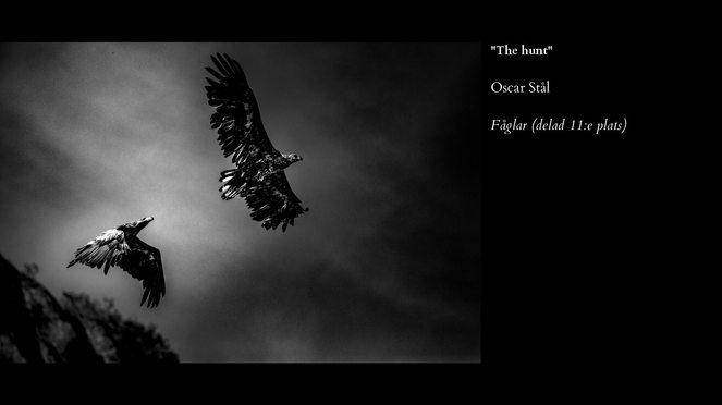 Fåglar-11.jpg