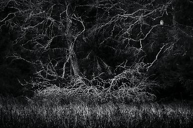 Anders Sundkvist - J Bauer Owl.jpg