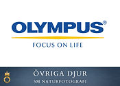 Olympus - övriga djur.jpg