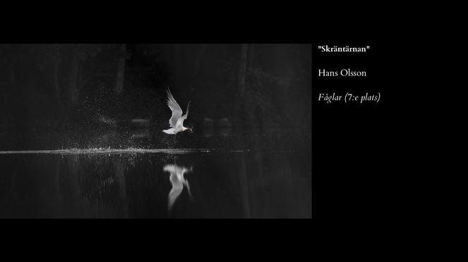 Fåglar-7.jpg