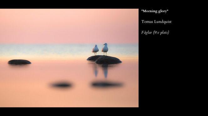 Fåglar-9.jpg