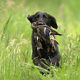 Anti Jagd Training.jpg