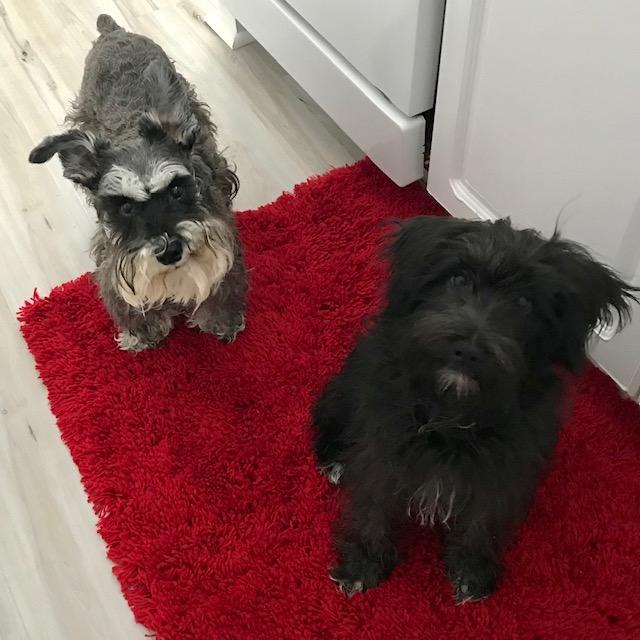 Daisy and Sadie