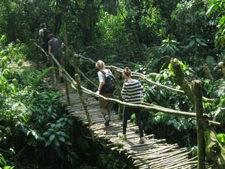 Gorilla Trekking - Uganda