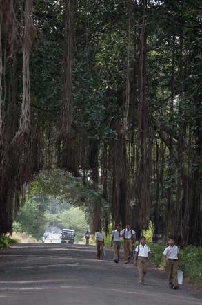 Hacia la escuela | India