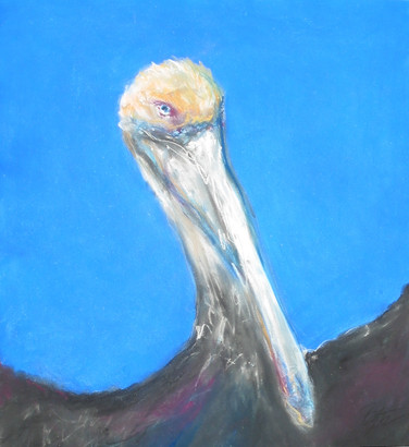 Wild Brown Pelican