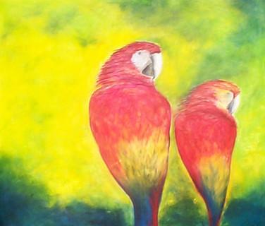 Endangered Macaws