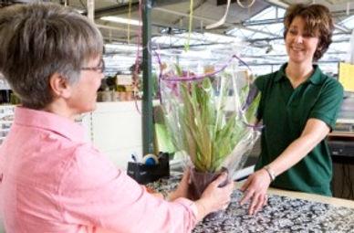 knop voor site gratis planten corona.jpg