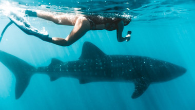 SWIMMING WITH HUMPBACK WHALES AND WHALE SHARKS