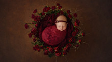Why you should book your Newborn Photographer after the 12 week scan | Newborn Photographer West Ber