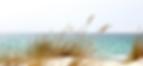 Beach Dune.png