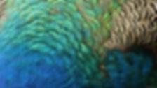 Peacock-Feathers-I-926.jpg