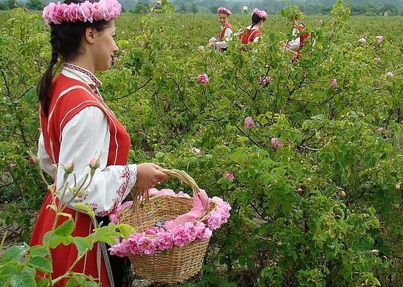 Kazanluk, pays de la rose
