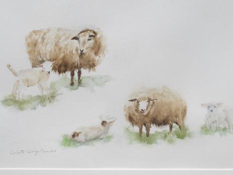 Moutons Anglais