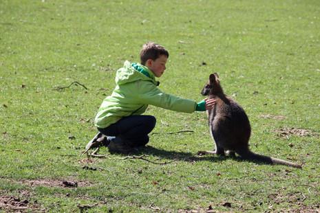 Hugo & kangourou