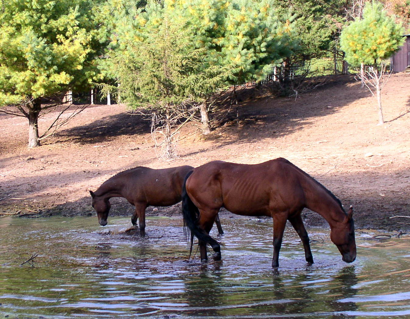 Rocko and Spirit in the water