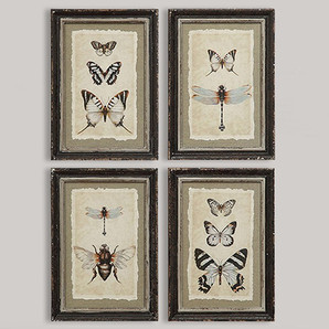 Vintage Wall Art Reproduction Insect Prints With Distressed Wood Frames, Set Of 4