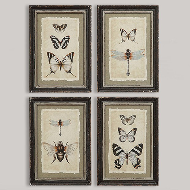 vintage insect prints wall art