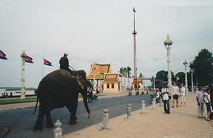Elephants on street in Phnom Penh, Cambodia