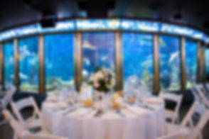 Shedd-Aquarium-Seated-dinner-centerpiece-wedding