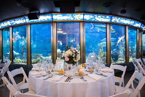 Shedd-Aquarium-Seated-dinner-centerpiece-wedding