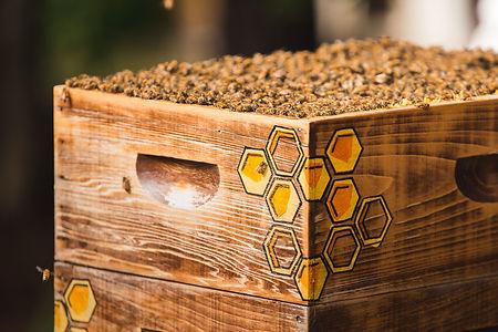 Best local honey - New Hill, NC