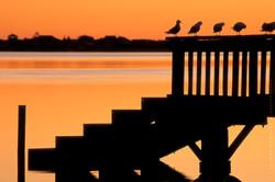 Sunrise, Estuary, Christchurch