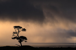 Winter silhouette - Taranaki