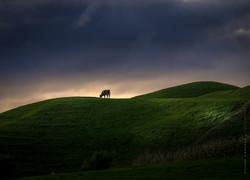 Dairy country - Taranaki