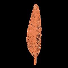 pluma 1.png