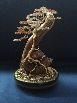 Driftwood Bonsai