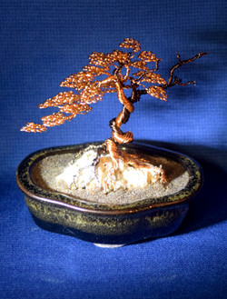 Bonsai on Coral
