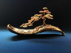 Bonsai on Poinciana Pod
